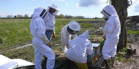 Beekeeping Course-Hands on One day Intensive Beekeeping Class tickets
