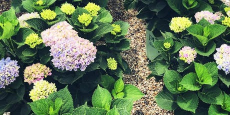 Education Series: Hydrangeas! - Springfield, IL tickets