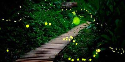 viaje a santuario de las luciérnagas
