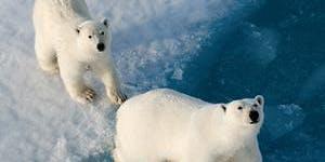 Polar Region Mini Travel Expo