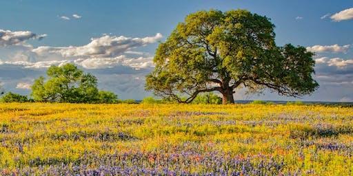 21 Plus Acrylic Spring Landscape 6/29/19