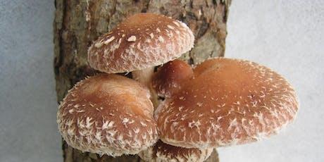 Growing Gourmet Mushrooms on Logs tickets