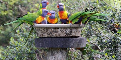 Gully Gardeners - Attracting Native Birds to your Garden