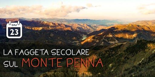 La faggeta secolare sul Monte Penna