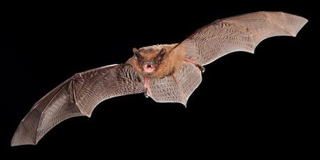 Ecology and Conservation of Bats tickets
