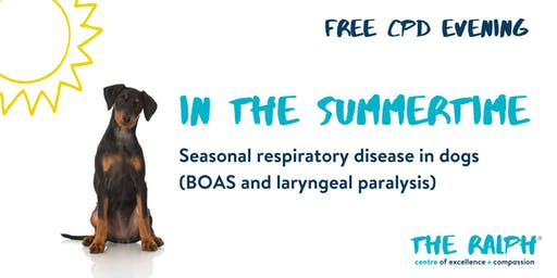 In the summertime - Seasonal respiratory disease in dogs
