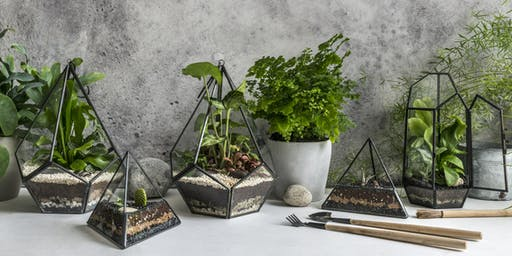 Tropical Terrarium Workshop