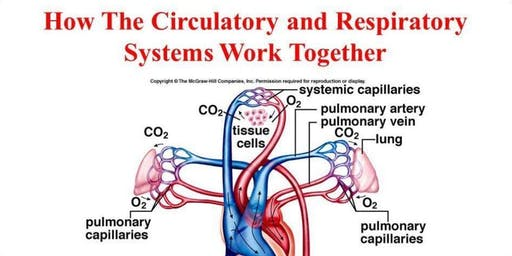 Respiratory and Cardiovascular systems - October - Worthing