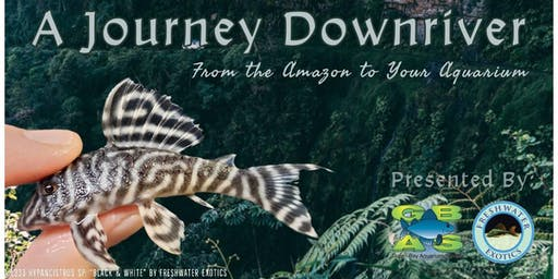 A Journey Downriver: From the Amazon to Your Aquarium