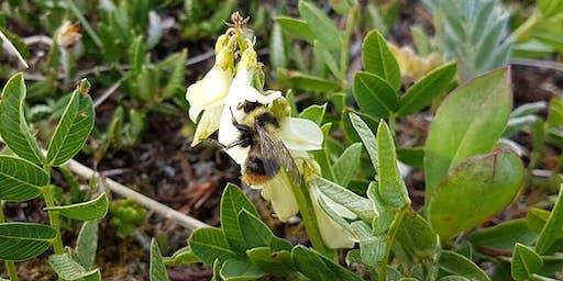 Bee Box Workshop ($30)