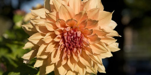 Flower Power Party: Dahlia
