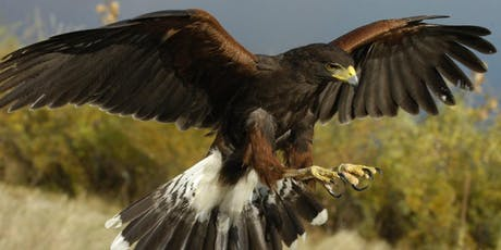 Atlas Obscura Society Denver: Meet-and-Greet - Colorado's Native Raptors tickets