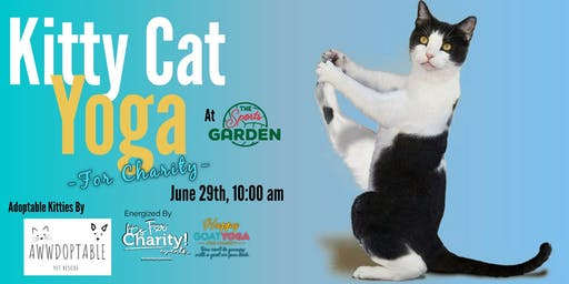Kitty Cat Yoga-For Charity at Sports Garden DFW (Indoor Session)
