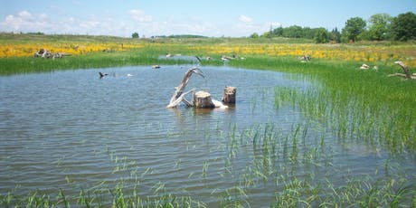 Headwater Wetland Restoration in Bob Hunter Memorial Park tickets