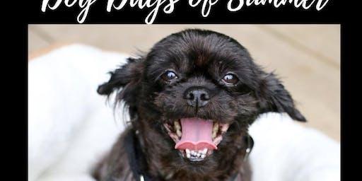 Dog Days of Summer   Adoption Event with Brandywine Valley SPCA