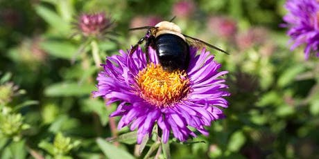 Heather Garden Pollinators Presentation with Leslie Day tickets