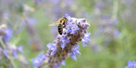 Bee Inspired! Workshop  tickets