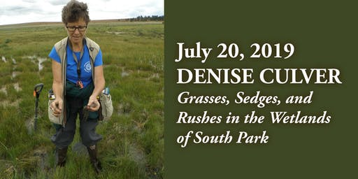 Grasses, Sedges, and Rushes in the Wetlands of South Park with botanist Denise Culver