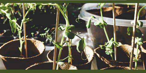Master Gardener Plant Clinics