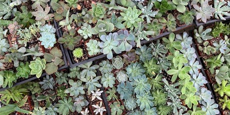 Succulents Made Simple tickets