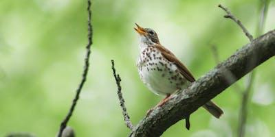 Let's Go Birding Together:  DC Audubon Society Bird Walk at Fort Dupont