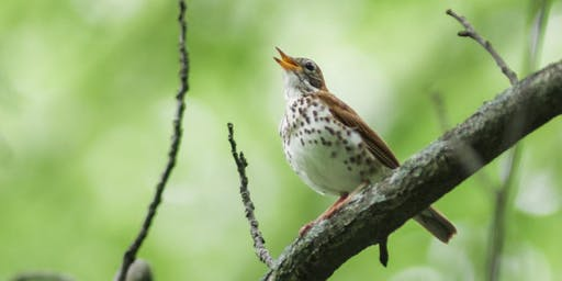 Let's Go Birding Together:  DC Audubon Society Bird Walk at Fort Dupont