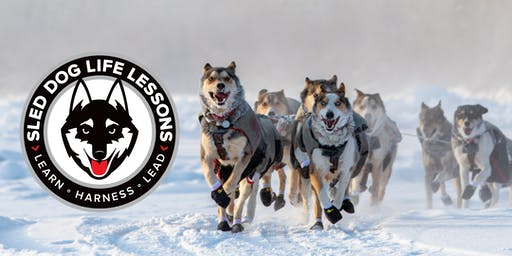 Sled Dog Life Lessons Workshop