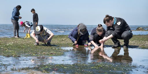 Junior Rangers Rockpool Ramble - Mushroom Reef Marine Sanctuary
