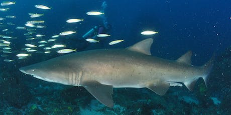 Sharks: our ocean guardians, and the importance of eating sustainable seafood tickets
