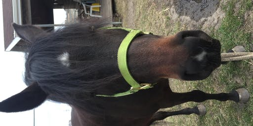 Adult Horse Riding Lessons