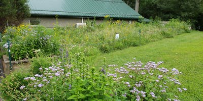 Grow Your Own Meadow - Talk and Walk