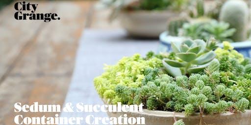 Sedum & Succulent Container Creation