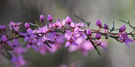 Blooming Boronias Walk tickets