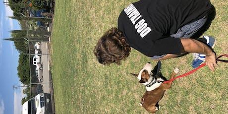 Group Dog Training Class tickets