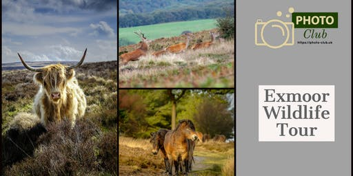 Exmoor Wildlife Photography Tour
