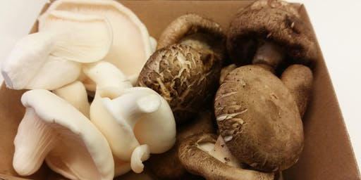 Zero Miles Mushrooms: learn to grow your own