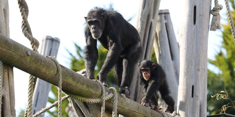 Budongo Research Unit Talk: Eye-Tracking with Great Apes tickets