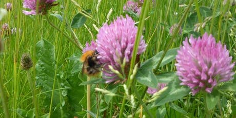 Discover the World of Bumblebees and Honeybees tickets