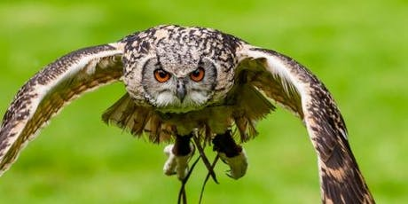 Lyde Green Wild Day Out - Birds of Prey, Local History & Nature Walk tickets