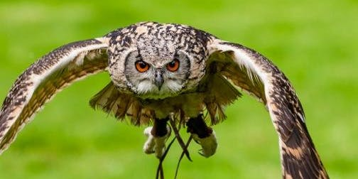 Lyde Green Wild Day Out - Birds of Prey, Local History & Nature Walk