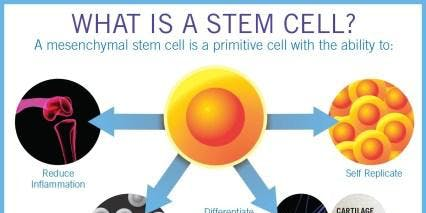 Discovering The Power of Stemcell