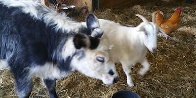 June 9th, Special Anniversary Open House Fiesta @ Dharma Farm Animal Refuge
