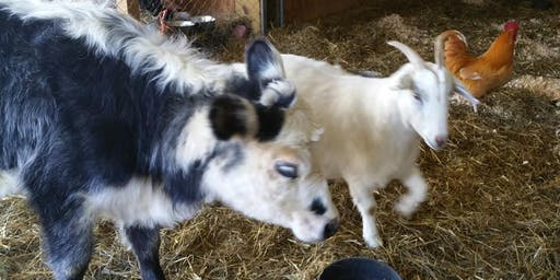 Open House and Sunday Brunch @ Dharma Farm Animal Refuge