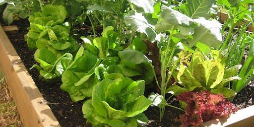 Summer Gardening 101: Preparing Your Garden for Summer