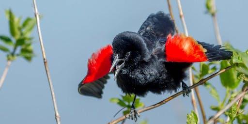 Birds of a Feather: Birds of Beaver Lake