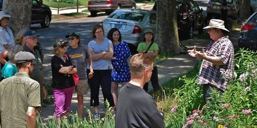 Pollinator Safari: Urban Insect Gardening with Native Plants