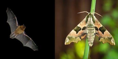 Bat & Moth Night tickets