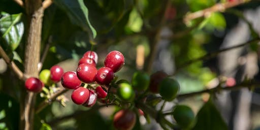 The Coffee Buyers' Cupping Table: Organic Coffees