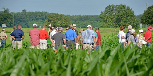 Pender County Corn and Auxin Herbicide Update