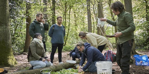 Foraging and wild cooking workshop, Saturday, 22 June 2019